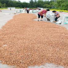 仙居今年桃种销售信息毛桃种子哪里有图片