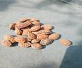 南皮桃种销售价格新毛桃种子价格