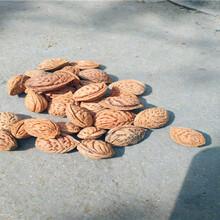 溪湖今年毛桃种销售价格毛桃种子价格图片