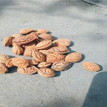 高要毛桃树种子价格新毛桃种子报价图片