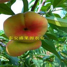 赵县3公分粗晚熟秋彤桃树苗多少钱图片