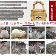 太原市獭兔养殖场图片