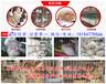 河南省比利時兔養殖基地