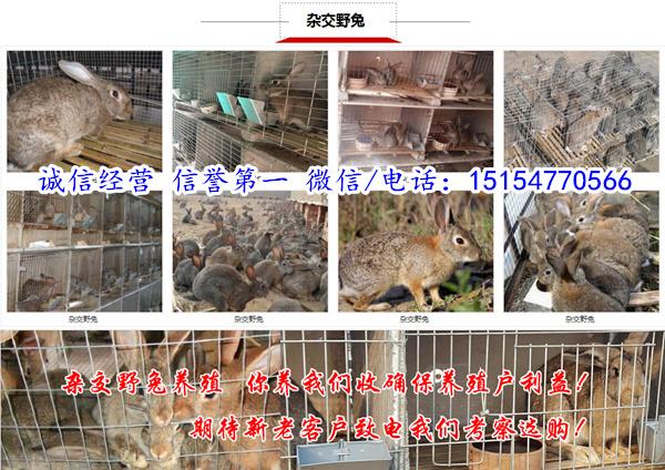 涞源县正规养兔基地