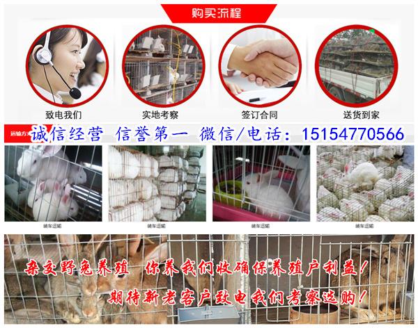 香坊本地养兔场免费提供养殖技术