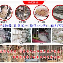 科尔沁左翼后旗种兔养殖基地包教包会图片