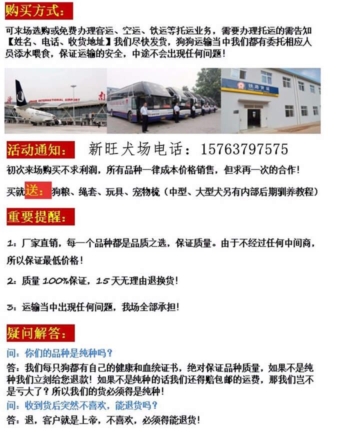 云阳县高加索养殖基地