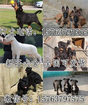 河南省濮阳市什么地方