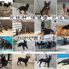 河北秦皇岛养狗场本地周边价格优惠图片