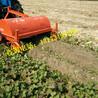 四轮带红薯杀秧机杀秧收获一体机多功能红薯收获机全自动无破损收获机
