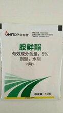 优利普-5.0%胺鲜酯水剂,促进植物生长,比芸苔素内脂都要好的一款调节剂