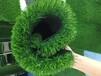 石河子塑料草坪幼兒園草坪廠家直銷總代直銷免費拿樣