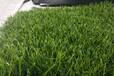 新余五公分足球場草坪施工廠家免費拿樣全國發貨