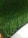 澳门足球场人造草坪厂家平方米价格总代直销免费拿样