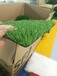 漳州人造草坪地毯彩虹跑道厂家直销总代直销免费拿样