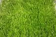 天津足球场人造草坪、永恒草坪来电询价免费拿样