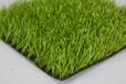 新疆足球场草坪施工厂家包工包料来电询价免费拿样