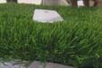 那曲人造草坪地毯彩虹跑道厂家直销来电询价免费拿样