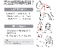 广东狗狗服装,东莞狗狗服装生产厂家,趣逗派
