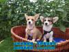 鶴崗寵物狗市場,鶴崗寵物狗價格大全,鶴崗寵物狗專賣店