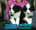 沧州宠物领养中心、沧州哪里有宠物狗领养