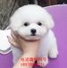 漳州哈士奇多少钱一只、大型犬