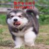 杭州犬舍倒闭,宠物狗低价出售,杭州资讯