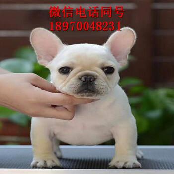 广元附近哪里有宠物狗出售,广元门户网