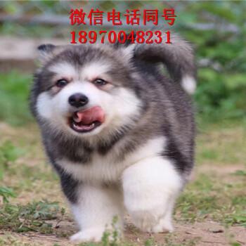 丽江狗场关门,小狗便宜出,丽江门户网