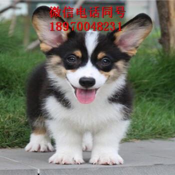 忻州狗场关门,小狗便宜出,忻州生活