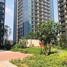 寶安松崗驚現深圳便宜商品房[臻裕城]單價2.8萬/平,買精裝現房
