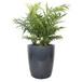花里巴巴精选绿植——袖珍椰子桌面盆栽小型绿?#24067;?#23621;绿植