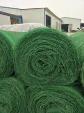 三維植被網多少錢三維土工網墊圖片