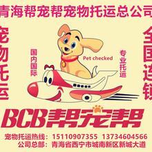 青海省至全國各地寵物托運找西寧幫寵幫寵物托運公司圖片