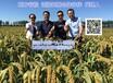 有机食品,东北黄小米,乾方谷粒黄小米,99%原生态黄小米诚招合作伙伴