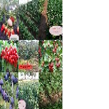 草莓苗多少錢一棵菠蘿莓供貨商草莓新品種基地圖片