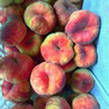桃樹苗多少錢一棵嫁接桃苗多少錢大量供應桃樹苗批發圖片
