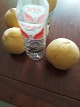 河北省保定市魯紅618桃苗今年哪個品種好桃樹苗結果早豐產性強桃樹苗圖片