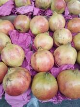突尼斯軟籽石榴苗批發基地常年紅黑石榴苗價格低結果多圖片