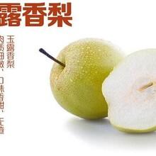 梨苗价格5公分皇冠梨树苗种植方法种植技术应该如何种植图片