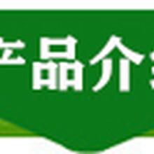 福建香椿苗本地貨源大棚香椿畝產圖片