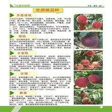 今年金香桃樹苗價格