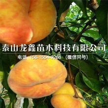 金色花果桃樹苗價格、金色花果桃樹苗價格及報價