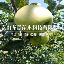 種植紅富士蘋果苗銷售價格、紅富士蘋果苗銷售價格