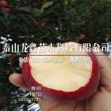 購買秦脆蘋果樹苗一棵多少錢、秦脆蘋果樹苗一棵多少錢
