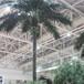 仿真椰子树,仿真大王椰,厂家专业生产