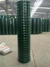 廠家直銷四川果園圈地護欄網養殖荷蘭網綠色鐵絲網圍欄圖片