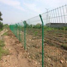 农场圈地绿色铁丝网圈地护栏网钢丝网成都生产厂家