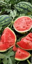 什么甜王西瓜种子适合露地种露地甜王产量高图片