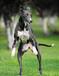 短跑冠军惠比特犬商洛市有卖惠比特犬的吗